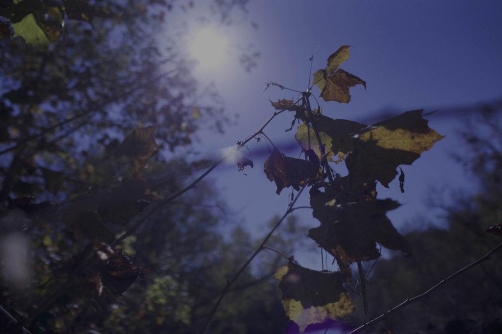 Nature shoot Jonny Ray Leaves